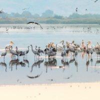 утро на озере :: Валерий Цингауз