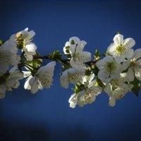 весна :: Марина Ринкашикитока