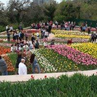 Крым. Никитский ботанический сад. Бал тюльпанов :: татьяна