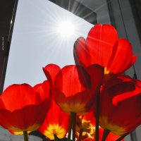поймать солнце :: Роза Бара