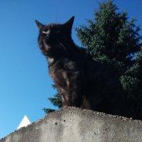 Черный кот :: Вероника Озем