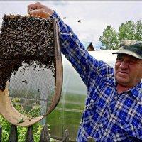 Пчеловод :: Кай-8 (Ярослав) Забелин