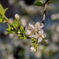Весна :: Николай Саржанов