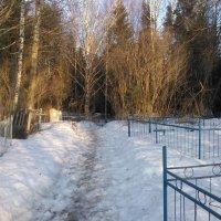 Тропинка на зимнем кладбище. :: Марина Китаева