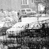 Снегопад в ЧБ... :: Дмитрий Петренко