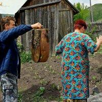 Рой роится - Зосима веселится!.. :: Кай-8 (Ярослав) Забелин