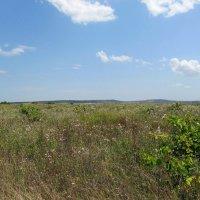 Луговые травы :: Вера Щукина