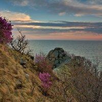 Там,где цветёт багульник. :: Сергей