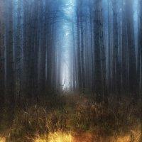 Синий туман... :: leonid