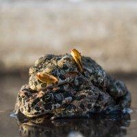 Лягушки :: Павел Кореньков