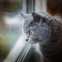 А за окнами дождь... :: Александр Рамус