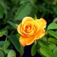 Желтая красота :: Дубовцев Евгений
