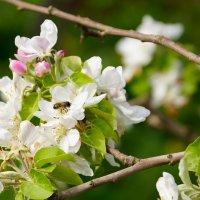 весенний мёд :: Наталия Сарана