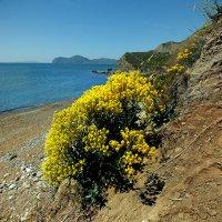 весенние берега Киммерии :: viton