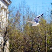 Полёт :: Дмитрий Переяслов