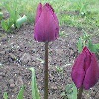 В Украине Весна! :: Миша Любчик