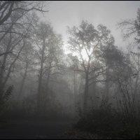 Утро в осеннем лесу :: Алексей Патлах