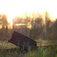 На закате :: Надежда Крылова