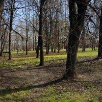Весна в парке. :: Ирина Лебедева