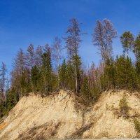 Весна в Западной Сибири :: Дмитрий Сиялов