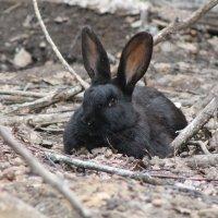 кролик :: влад