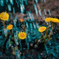 Под дождём :: Ольга Осовская