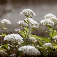 Весна_2 :: Валерий Левичев