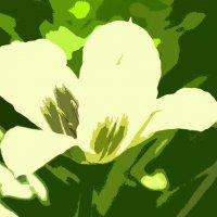 Травка зеленеет, солнышко блестит... :: Татьяна Евдокимова