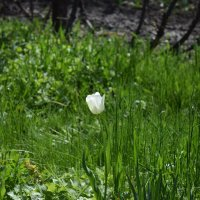 Весна :: Юрий