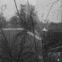 Дождливый день. :: Виктор Тарасюк