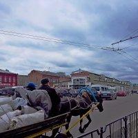И овес нынче тоже не дешев... :: Vladimir Semenchukov