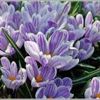 Весна идёт, весне дорогу! :: muh5257