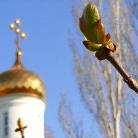 Весна :: Александр Алексеев