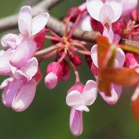 Яркие краски весны :: Swetlana V
