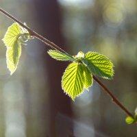 Весна идет :: Олег Пученков