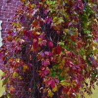 Дикий виноград на Башне-Руине... :: Sergey Gordoff