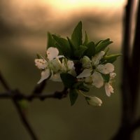 Весна и утро :: Валерий Лазарев