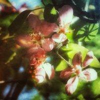 Непростая весна :: Ирина Сивовол