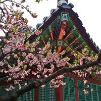 Красоты Сеула в апреле :: Светлана