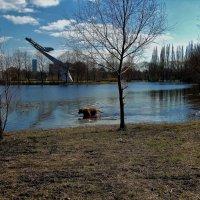 Тёплый день,пёсика тянет искупаться.. :: Sergey Gordoff