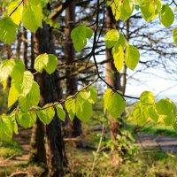 Должно быть, Творец в один и тот же день создал весну и надежду. Берн Уильямс :: Ирина ...............