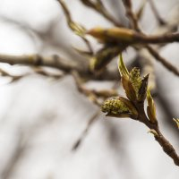Весна в городе :: Мария Ходырева