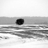 Одиночество :: Виктория Большагина