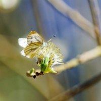 Приятно видеть как вся природа оживает под майским солнышком :: Анатолий Клепешнёв