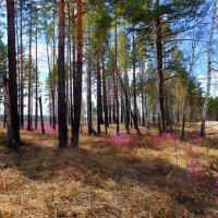 Знаки весны :: Евгений Карский