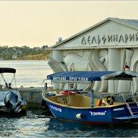 Севастопольский Дельфинарий :: Кай-8 (Ярослав) Забелин
