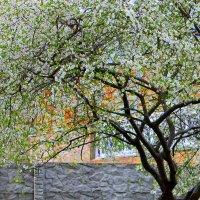 И запели птицы разными ладами, как и мы, любуясь майскими садами. :: Валентина ツ ღ✿ღ