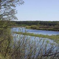 заводь у реки :: оксана