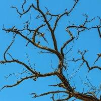 Этюд с сухим деревом, горлицами и дроздами :: Юрий Яловенко