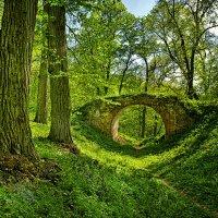 ...если в лесу ходить тайными тропами... :: Александр Бойко
